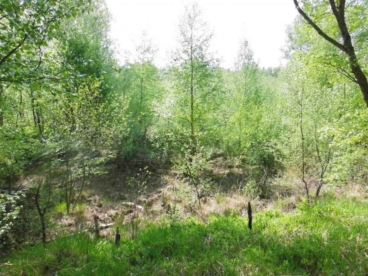 """""""Auf ins Moor!"""" Bürgerverein Wüsting - Die vierte Moorwanderung 2015 - Naturroute Holler- und Wittemoor"""
