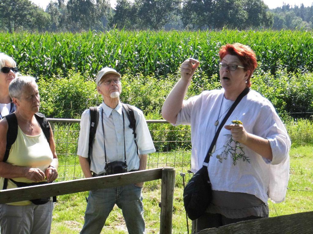 Moorwanderung mit Kräuterführung mit Stefanie Wagner und Bürgerverein Wüsting e.V. vom 23.08.2015 im Holler- und Wittemoor, nähe Hude